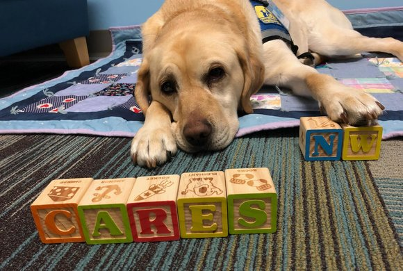Photo of a dog with CARES NW blocks