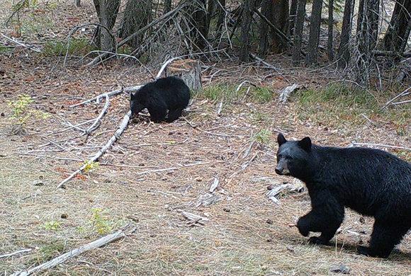 Photo of bears